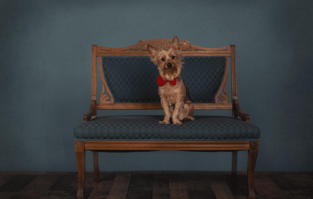 Luxury Pet Portraits | Northern Kentucky