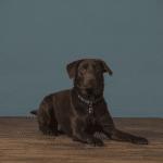 formal pet portrait