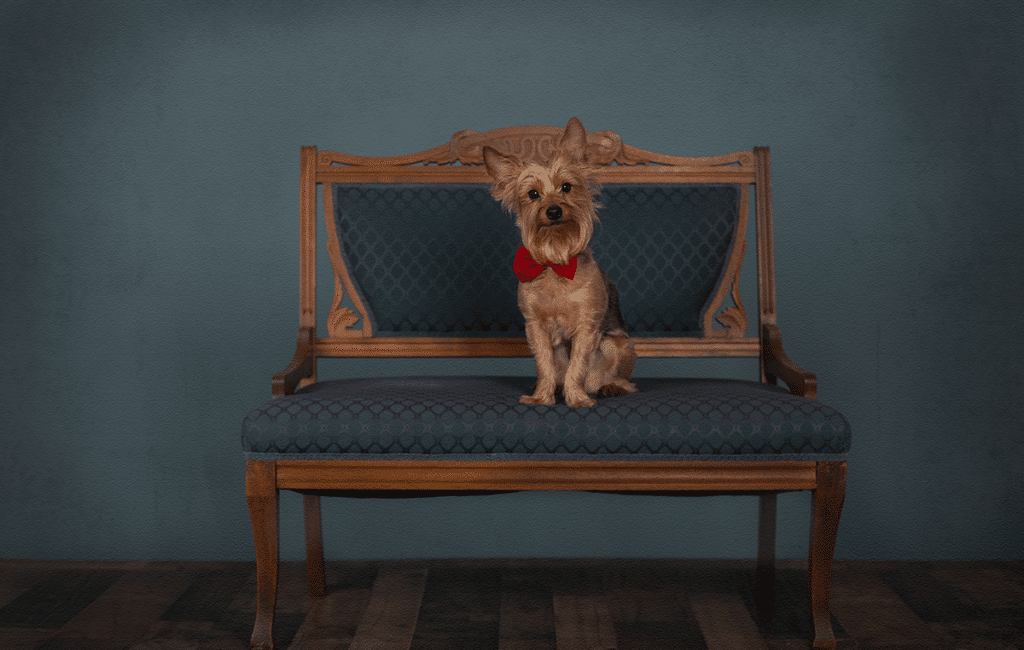 Luxury Pet Portraits | Northern Kentucky