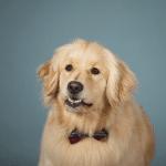 contest winner pet portrait